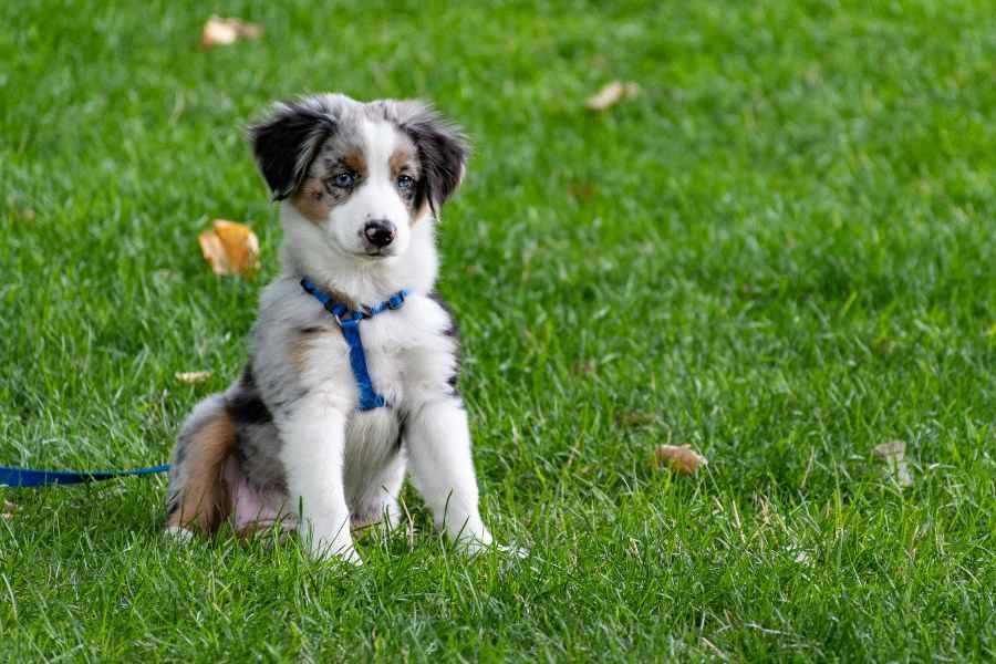 Pet Insurance (3)-min