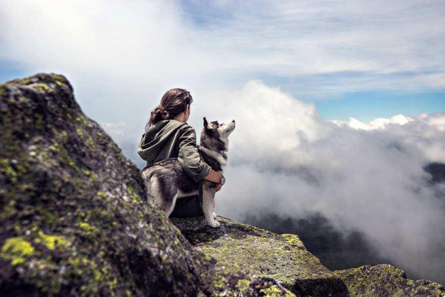 pet-insurance-min