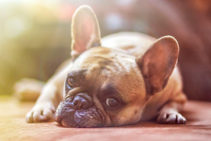 pet-insurance-tips
